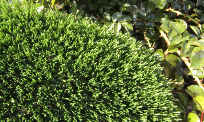 Hollow Blade-73 syntheticgrass Artificial Grass Seattle, Washington