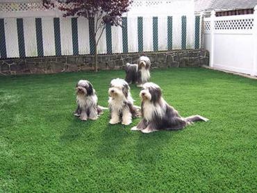 Artificial Grass Photos: Synthetic Grass Cost Vancouver, Washington Landscaping, Dogs
