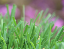 Outdoor Synthetic Grass